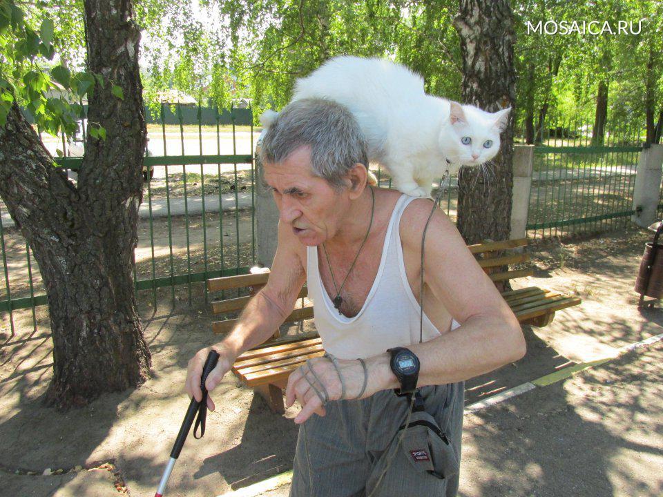 Фотография: пожилой мужчина с белой тростью в руках и с белой кошкой на плече