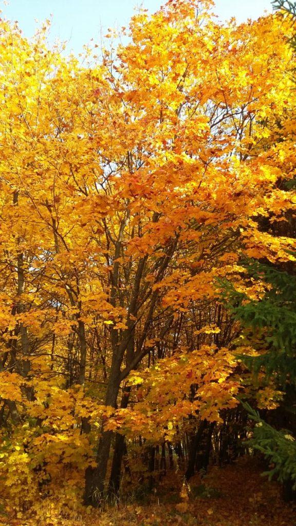 """Осенние листья, логотип сайта """"Листопад""""."""